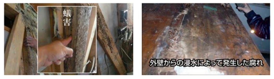 シロアリによる住宅の劣化写真